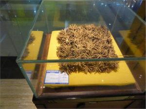 成都生薬市場の冬虫夏草